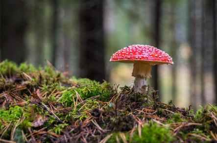 Foto door Egor Kamelev op Pexels.com