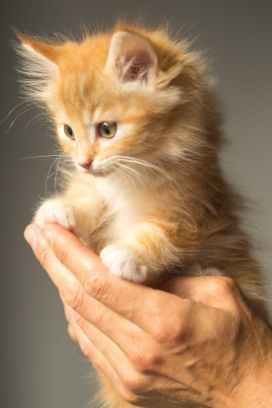 Foto door Skitterphoto op Pexels.com