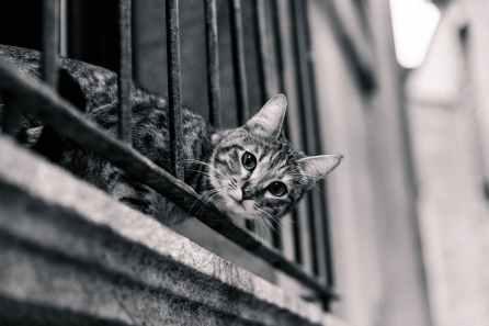 Foto door Tookapic op Pexels.com