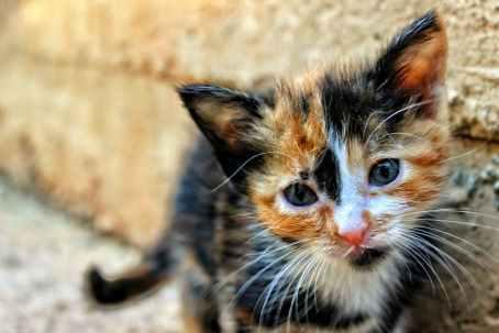 Foto door burak kostak op Pexels.com