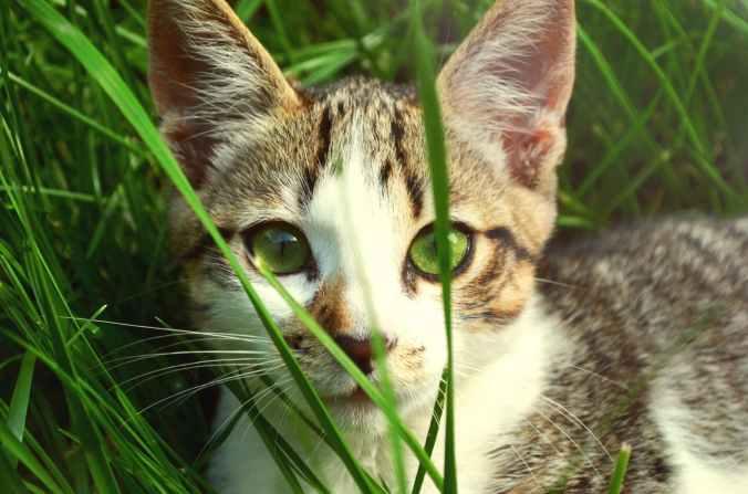 animal pet eyes grass