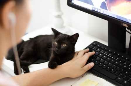 Foto door Ruca Souza op Pexels.com