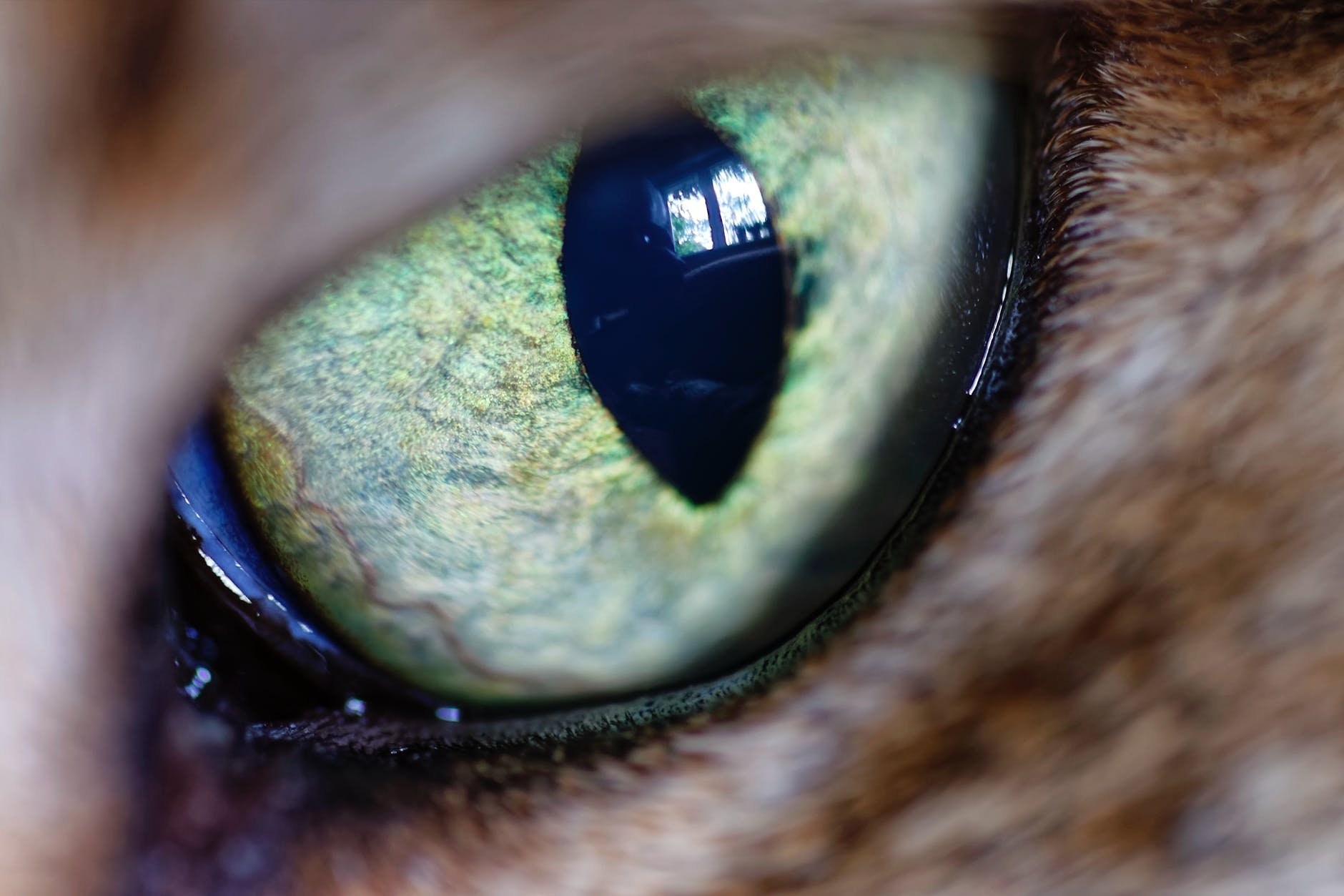 animal s green eye