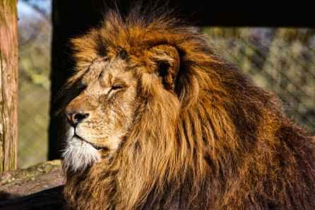 Foto door Andy Bear Grills Barker op Pexels.com