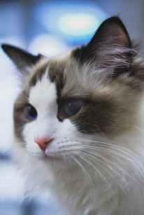 Foto door Peng Louis op Pexels.com