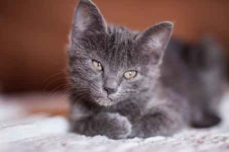 Foto door Engin Akyurt op Pexels.com