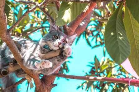Foto door tripleMdesignz op Pexels.com