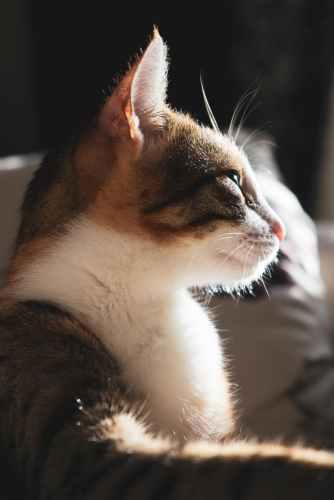 Foto door halilibrahimctn op Pexels.com