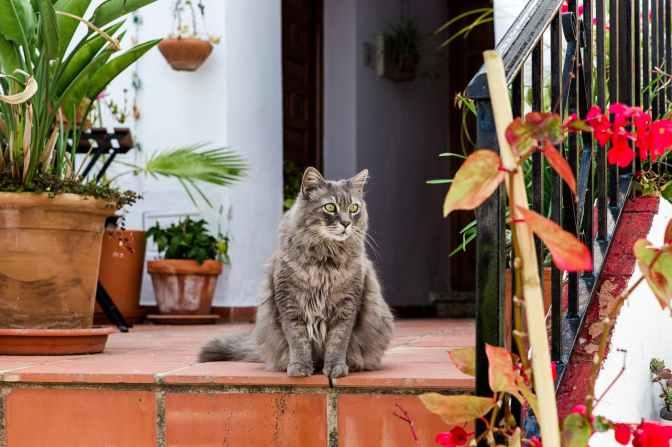 Foto door anna-m. w. op Pexels.com