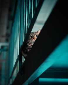 Foto door Ivandrei Pretorius op Pexels.com