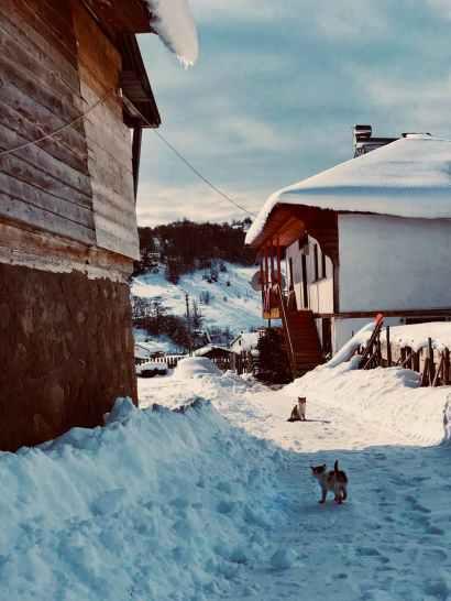 Foto door Utku Koylu op Pexels.com