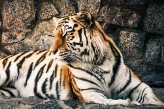 Foto door Margerretta op Pexels.com