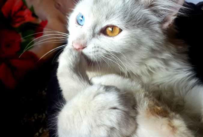 eyes cats cat