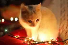 Foto door Eftodii Aurelia op Pexels.com