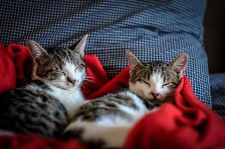 Foto door Francesco Ungaro op Pexels.com
