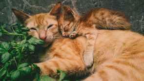 Foto door Mochamad Wildan op Pexels.com