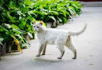 Foto door Xue Guangjian op Pexels.com