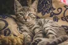 Foto door samer daboul op Pexels.com