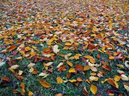 Foto door Public Domain Pictures op Pexels.com