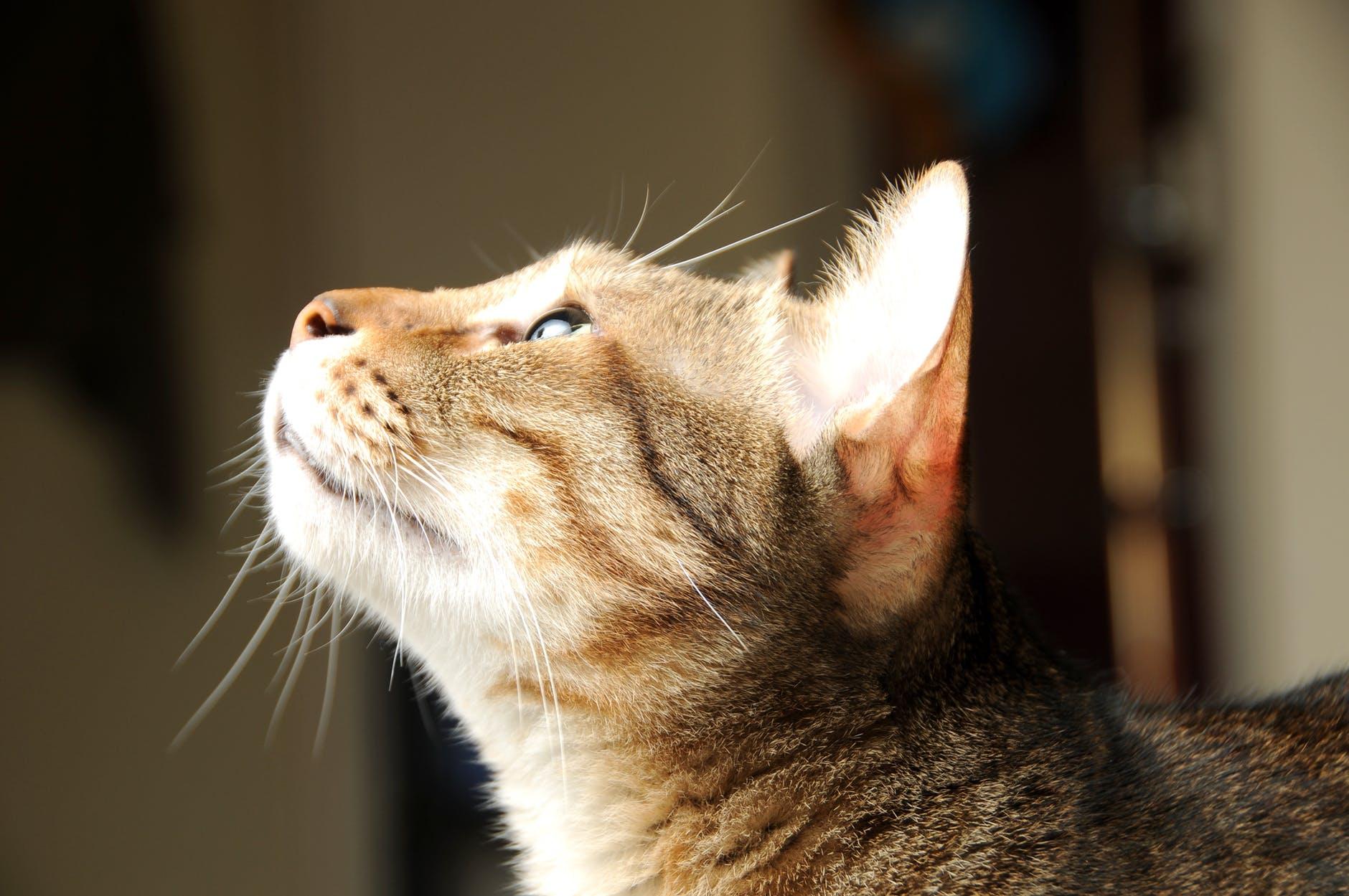 adorable animal cat cat face
