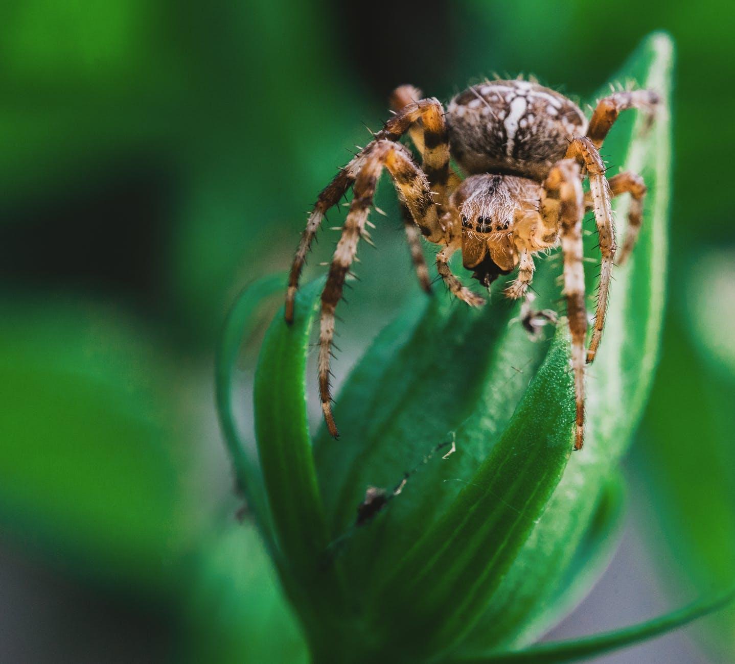 arachnid close up creepy hairy