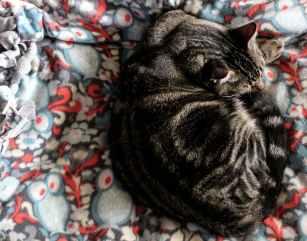 Foto door Amanda Linn op Pexels.com