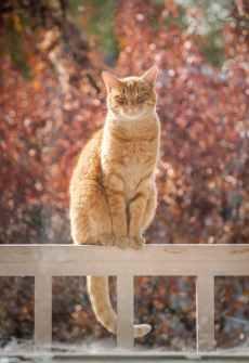 Foto door Bekka Mongeau op Pexels.com