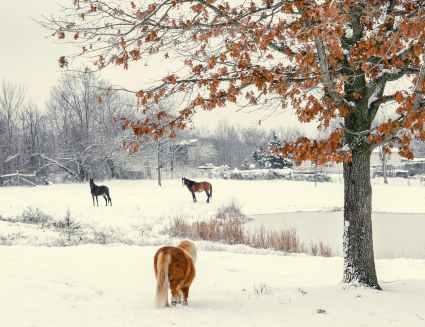 Foto door Milly Eaton op Pexels.com