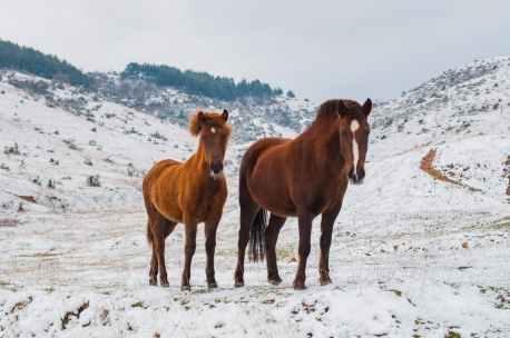 Foto door Hristo Fidanov op Pexels.com