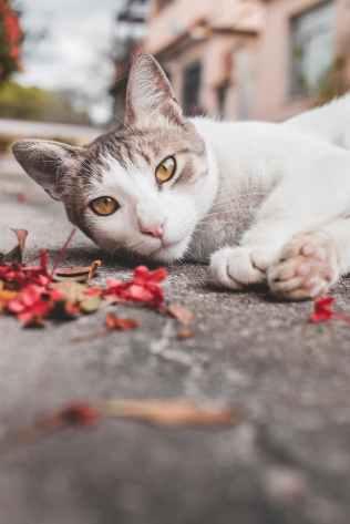 Foto door Jb Jorge Barreto op Pexels.com