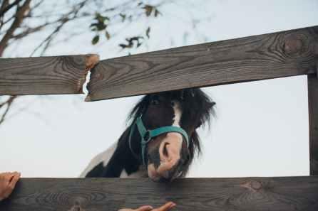 Foto door Elina Sazonova op Pexels.com