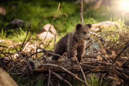 Foto door Janko Ferlic op Pexels.com