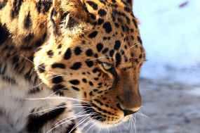 Foto door zoosnow op Pexels.com