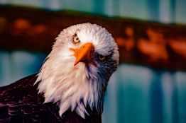 Foto door Darrell Gough op Pexels.com