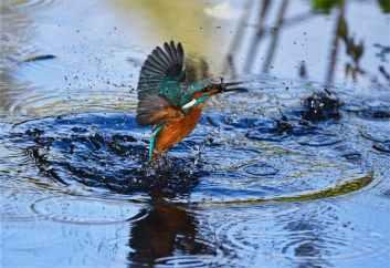 Foto door Andrew Mckie op Pexels.com