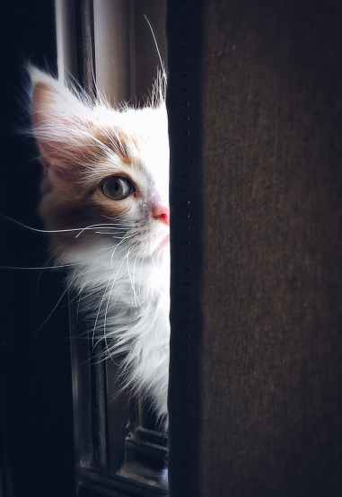 Foto door Henda Watani op Pexels.com