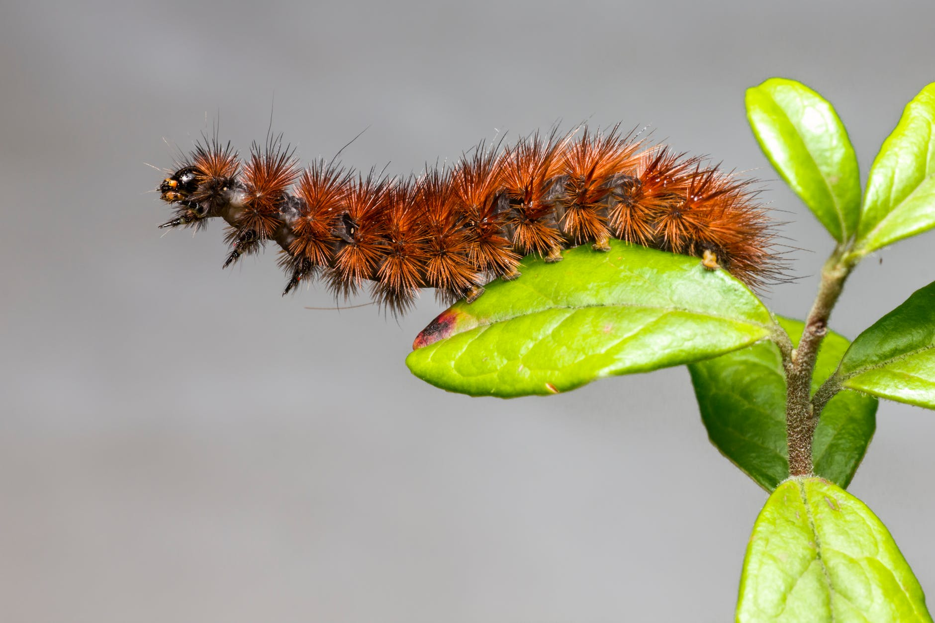 brown caterpillar on green leaf