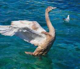 Foto door Denis Linine op Pexels.com