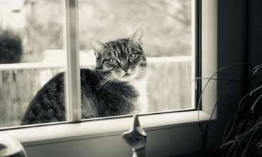 Foto door mac zeug op Pexels.com