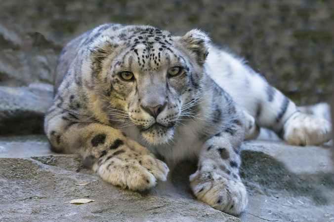 animal big ground fur