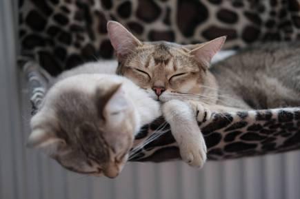 Foto door Tomas Ryant op Pexels.com